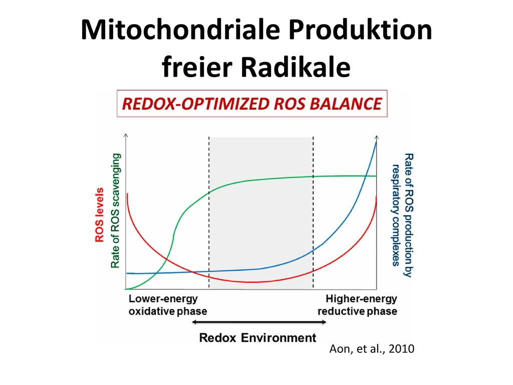 Mitochondriale Produktion