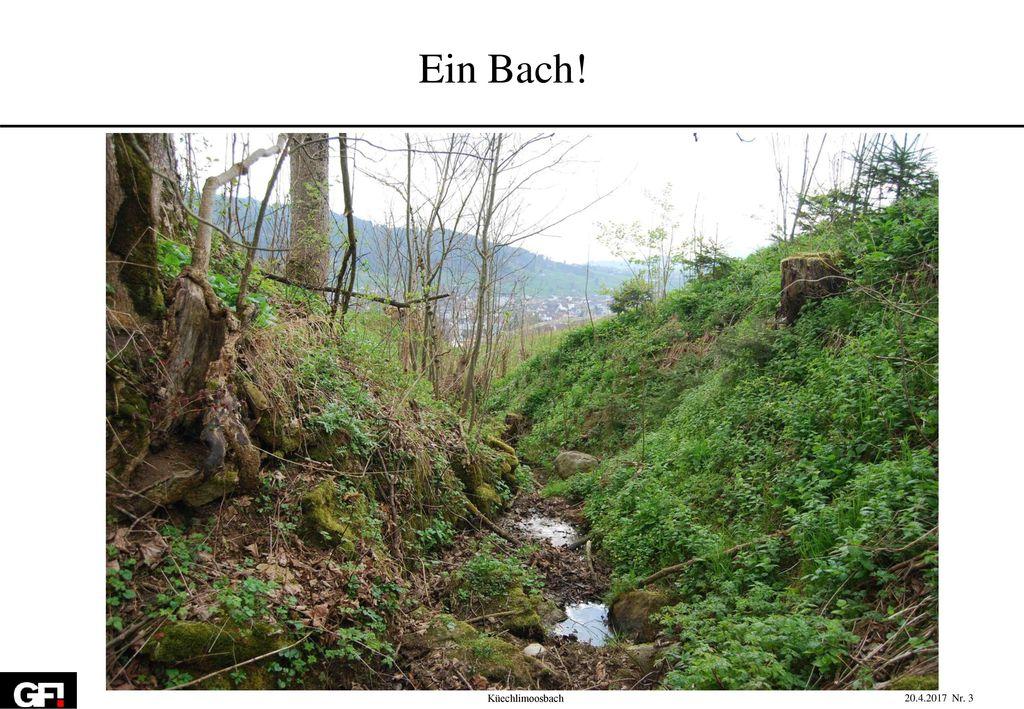 Ein Bach! Küechlimoosbach