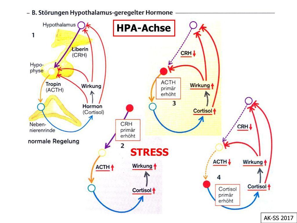 HPA-Achse STRESS AK-SS 2017