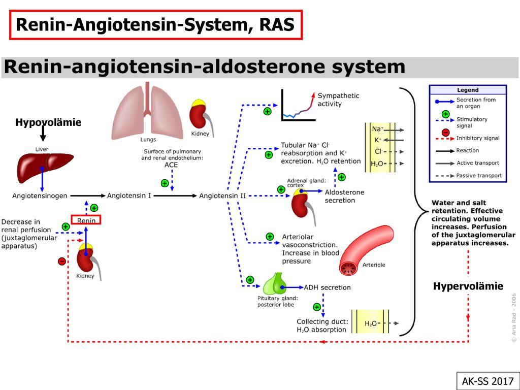 Renin-Angiotensin-System, RAS