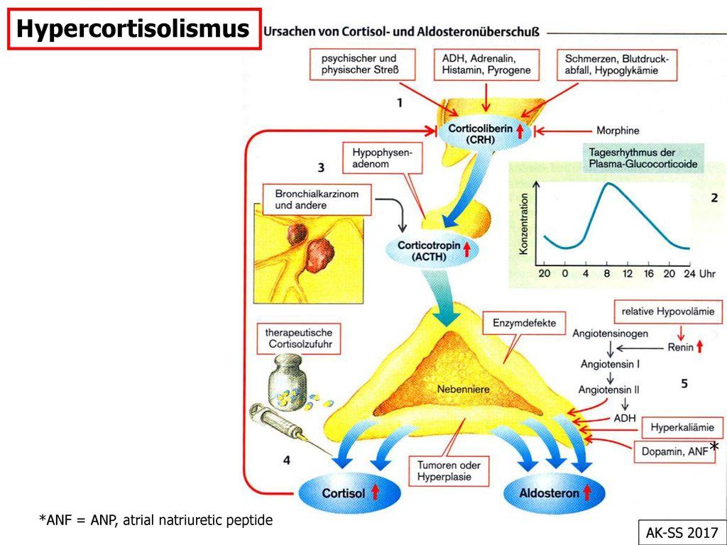 Hypercortisolismus * *ANF = ANP, atrial natriuretic peptide AK-SS 2017