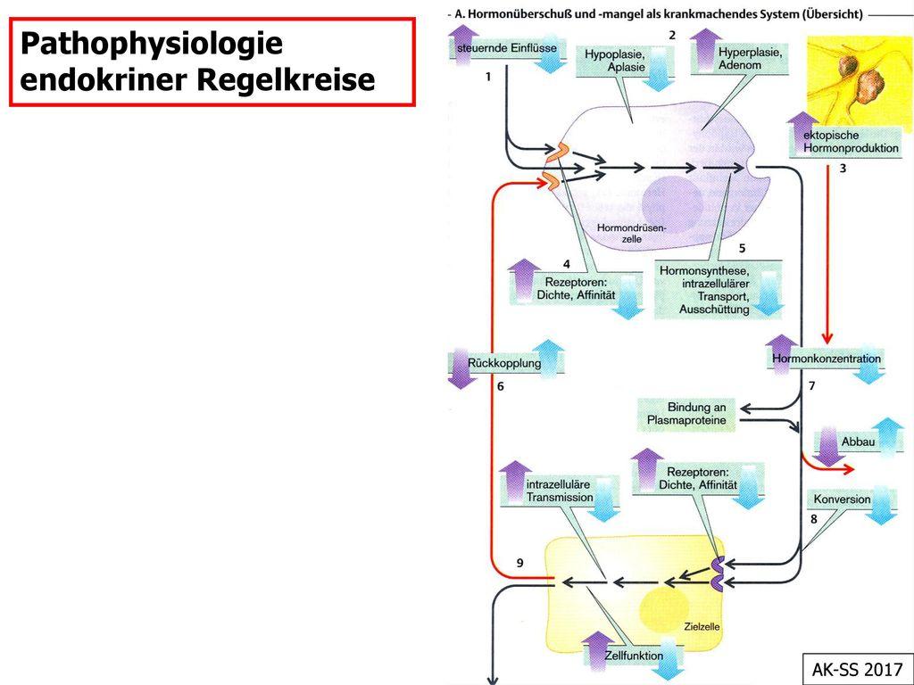 Pathophysiologie endokriner Regelkreise
