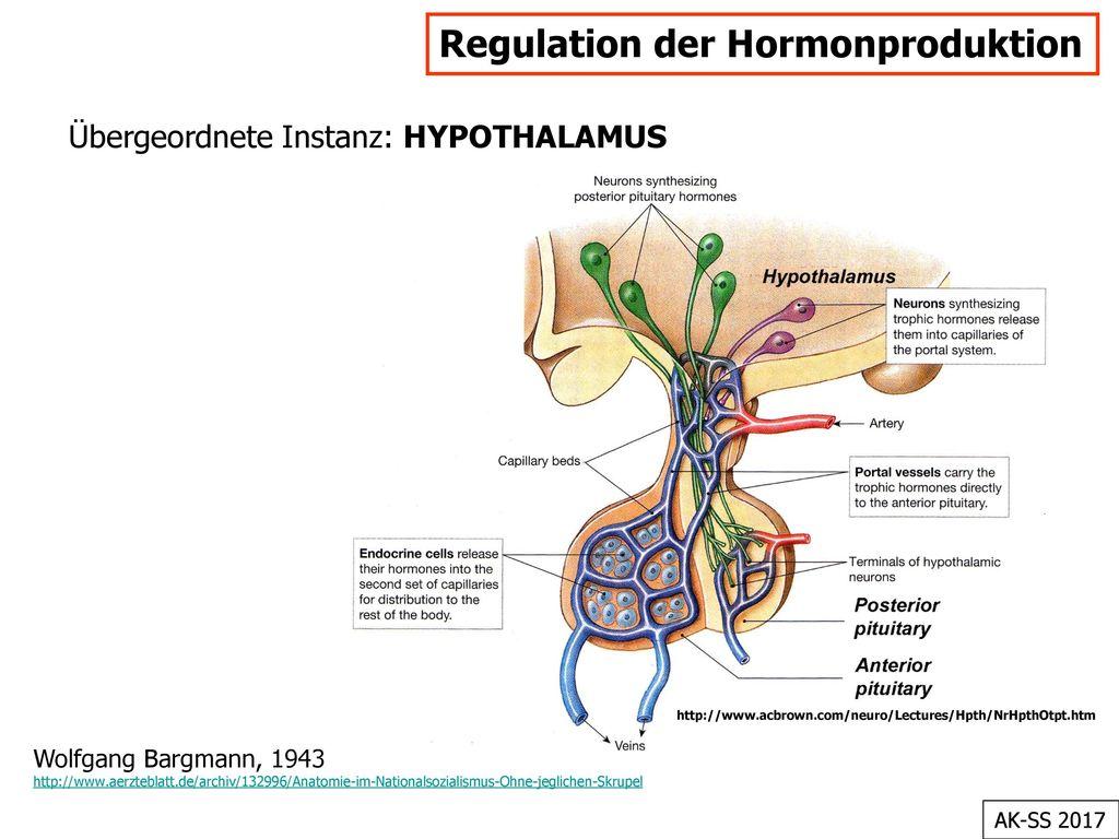 Regulation der Hormonproduktion