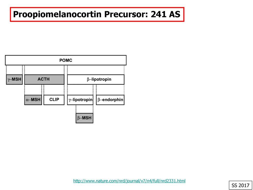 Proopiomelanocortin Precursor: 241 AS