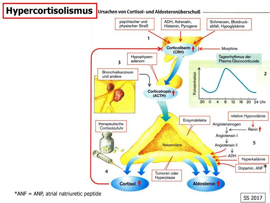 Hypercortisolismus * *ANF = ANP, atrial natriuretic peptide SS 2017 21