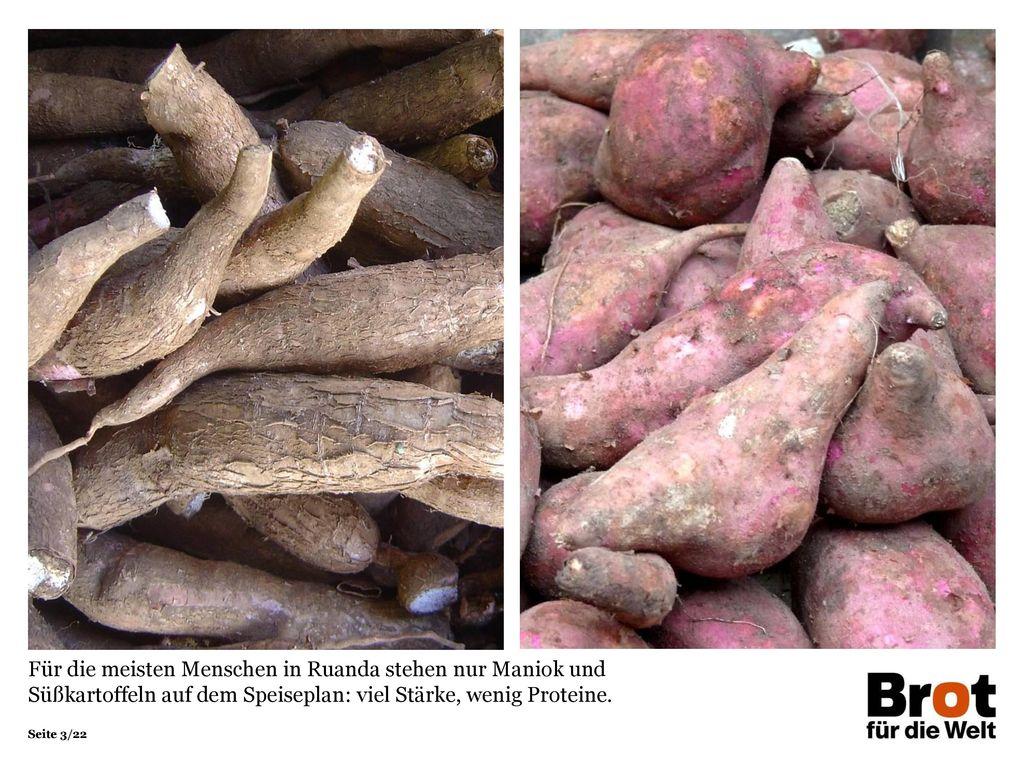 Für die meisten Menschen in Ruanda stehen nur Maniok und Süßkartoffeln auf dem Speiseplan: viel Stärke, wenig Proteine.