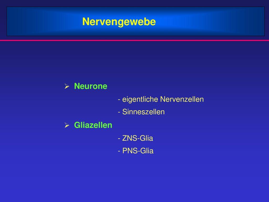 Nervengewebe Neurone - eigentliche Nervenzellen - Sinneszellen