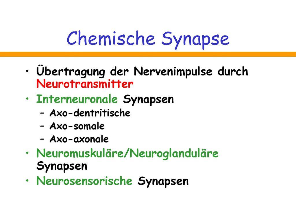 Chemische Synapse Übertragung der Nervenimpulse durch Neurotransmitter