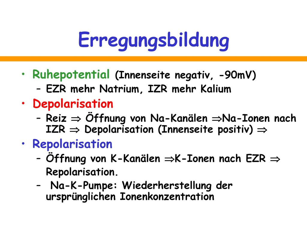 Erregungsbildung Ruhepotential (Innenseite negativ, -90mV)