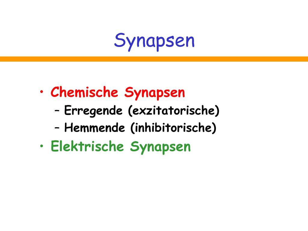 Synapsen Chemische Synapsen Elektrische Synapsen