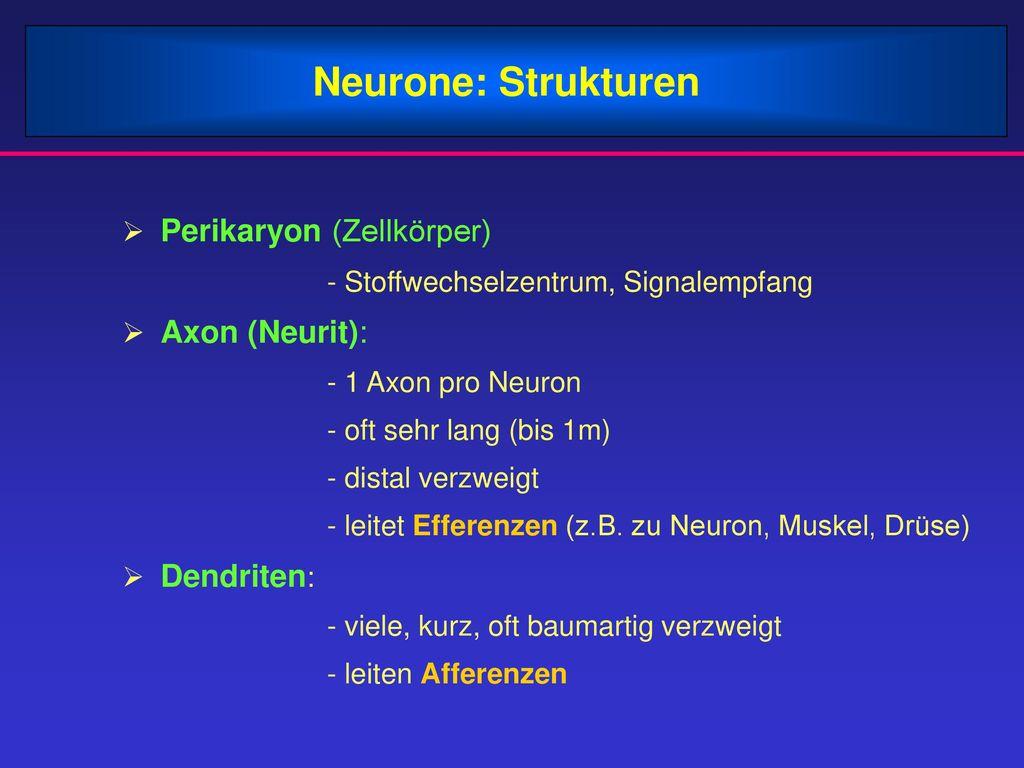 Neurone: Strukturen Perikaryon (Zellkörper)