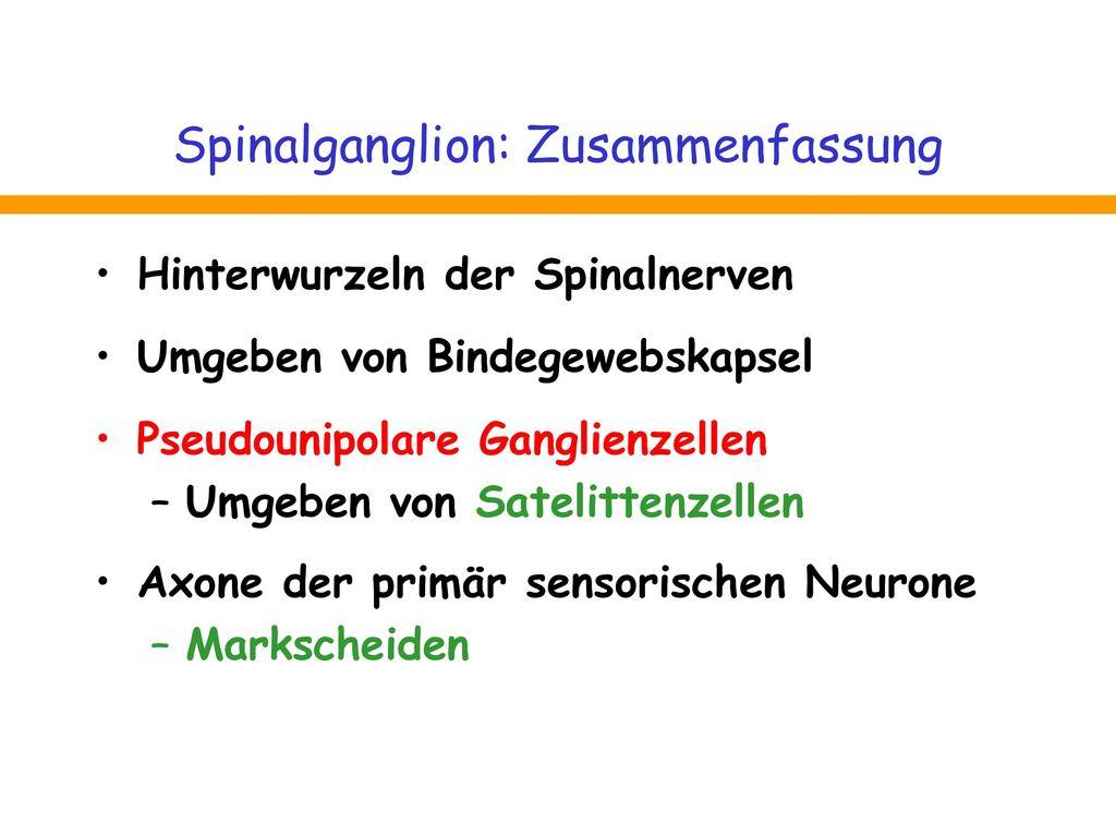 Spinalganglion: Zusammenfassung