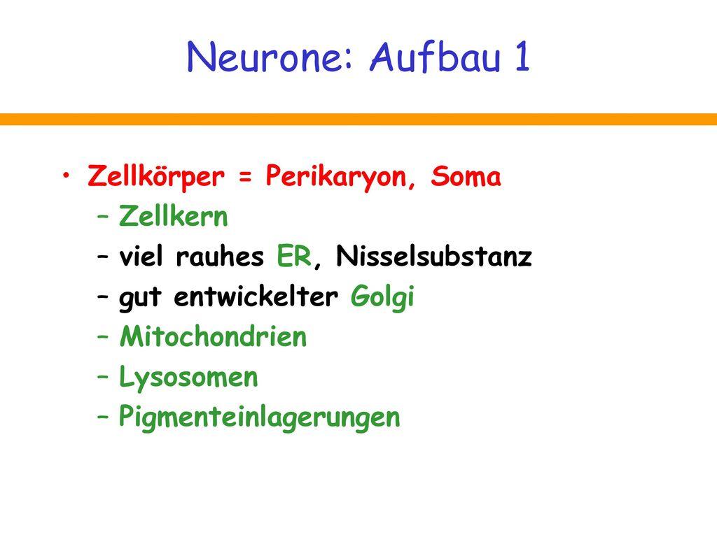 Neurone: Aufbau 1 Zellkörper = Perikaryon, Soma Zellkern