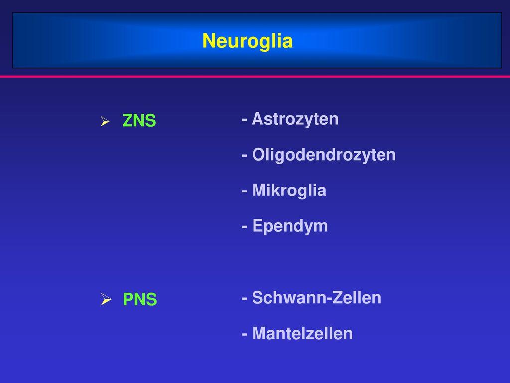 Neuroglia - Astrozyten - Oligodendrozyten - Mikroglia - Ependym