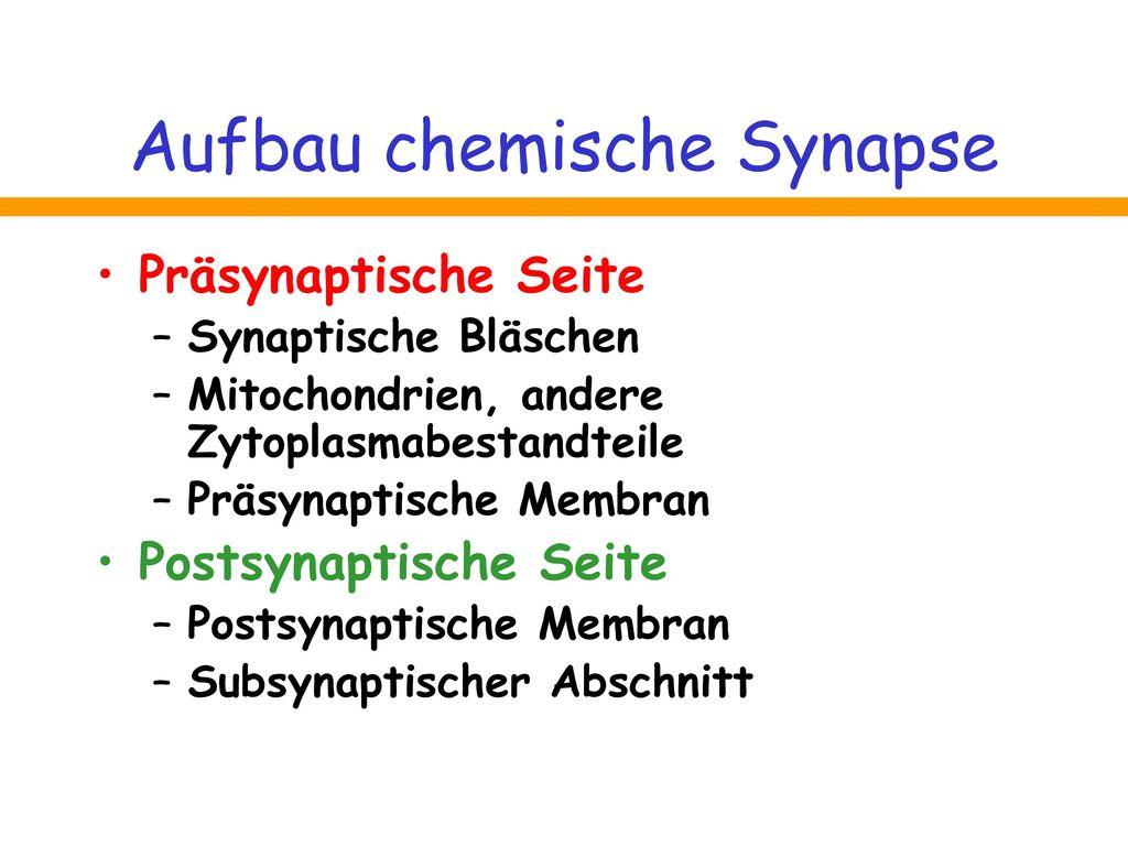 Aufbau chemische Synapse