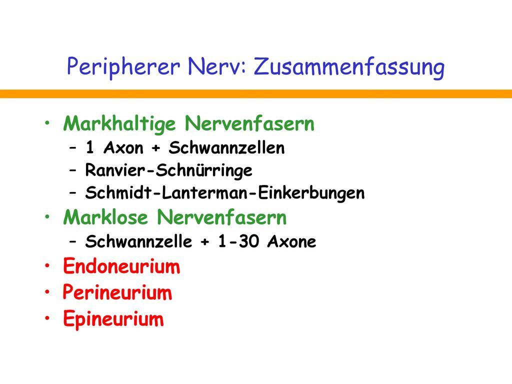 Peripherer Nerv: Zusammenfassung