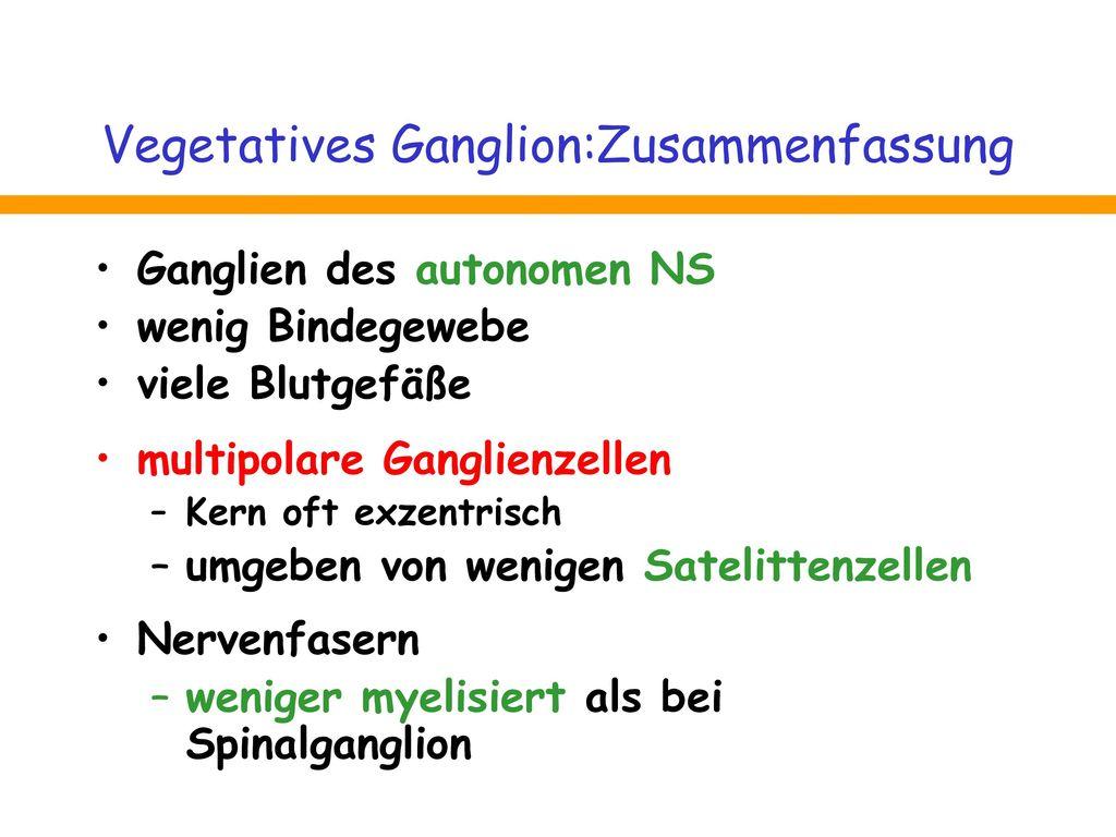 Vegetatives Ganglion:Zusammenfassung