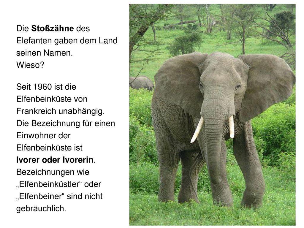 Die Stoßzähne des Elefanten gaben dem Land seinen Namen.