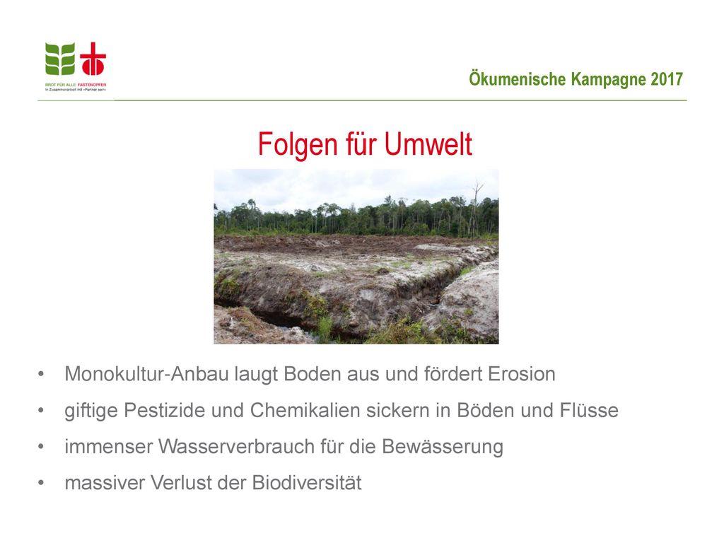 Folgen für Umwelt Monokultur-Anbau laugt Boden aus und fördert Erosion