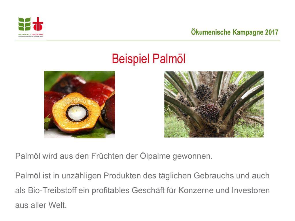 Beispiel Palmöl Palmöl wird aus den Früchten der Ölpalme gewonnen.