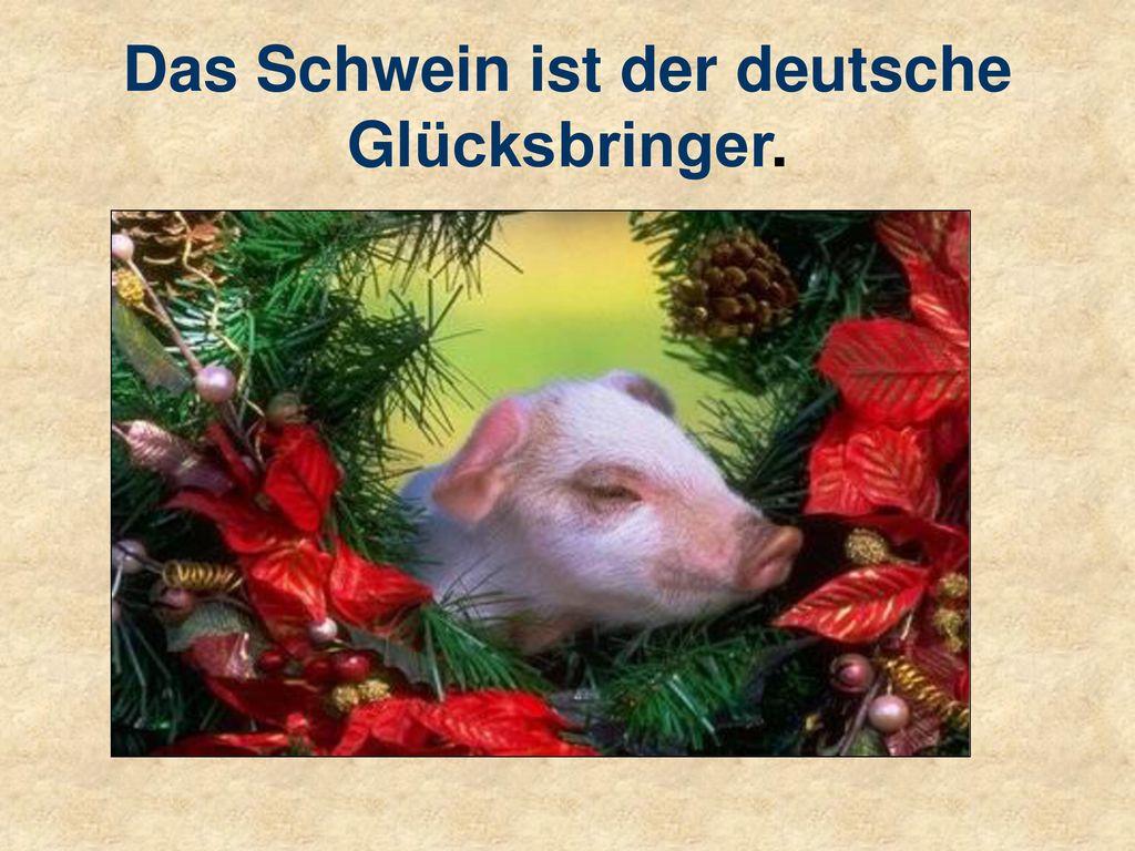 Das Schwein ist der deutsche Glücksbringer.