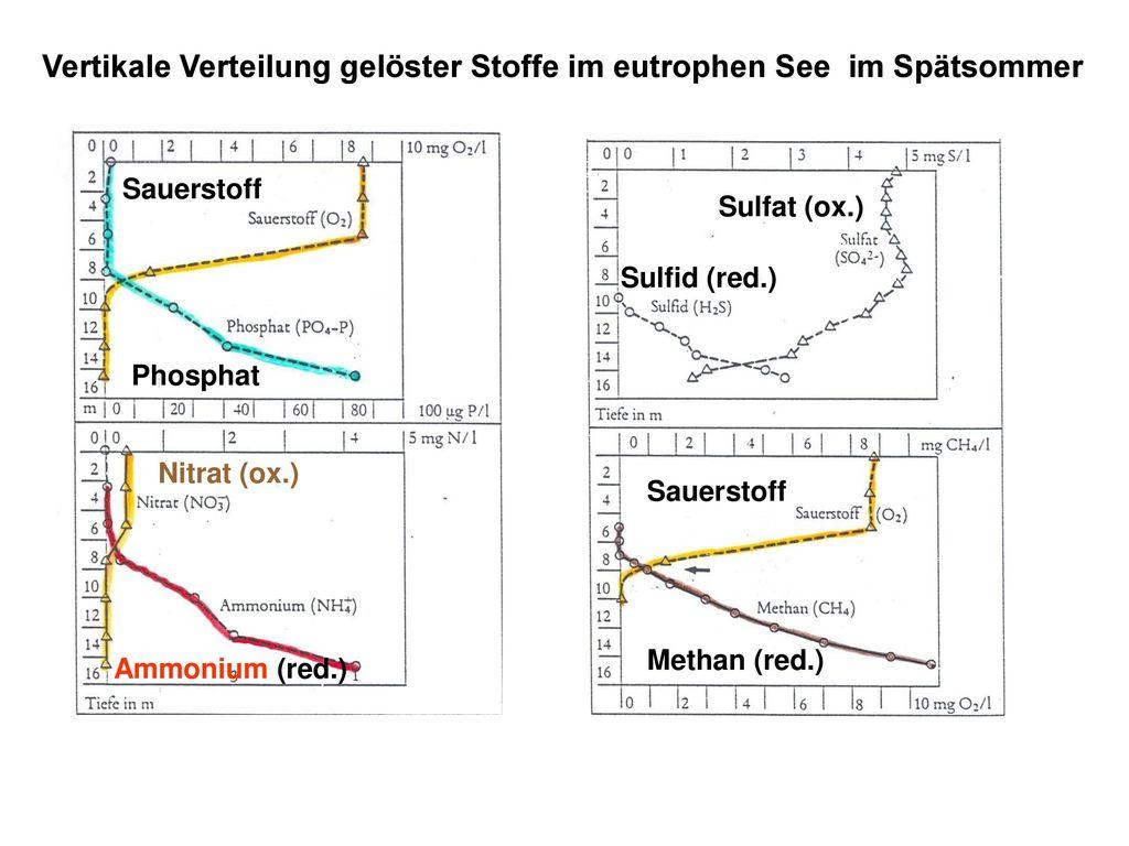Vertikale Verteilung gelöster Stoffe im eutrophen See im Spätsommer