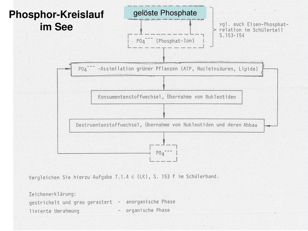 Phosphor-Kreislauf im See