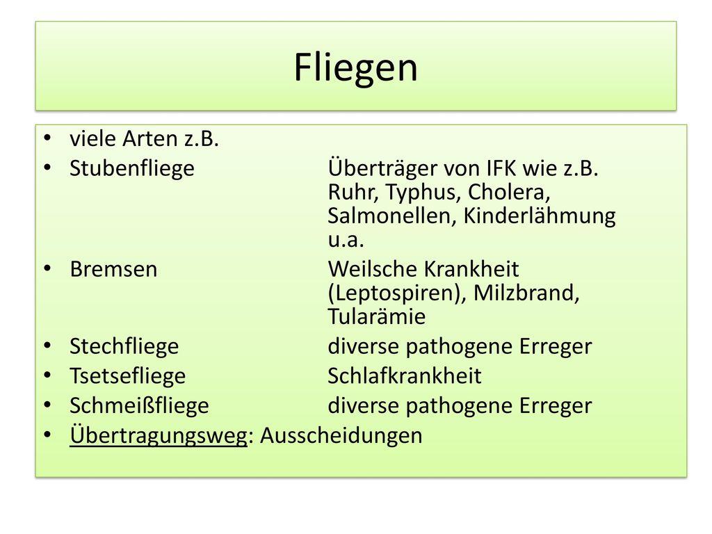 Fliegen viele Arten z.B. Stubenfliege Überträger von IFK wie z.B. Ruhr, Typhus, Cholera, Salmonellen, Kinderlähmung u.a.