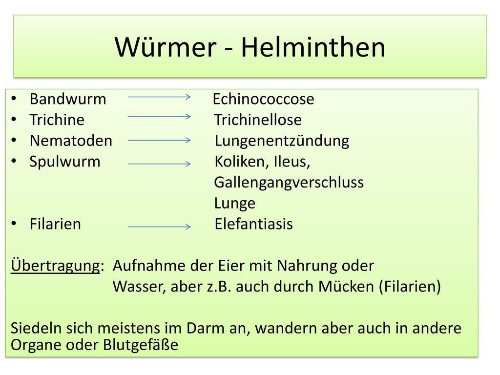 Würmer - Helminthen Bandwurm Echinococcose Trichine Trichinellose