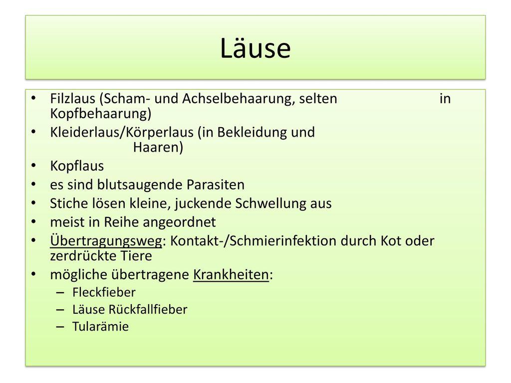 Läuse Filzlaus (Scham- und Achselbehaarung, selten in Kopfbehaarung)