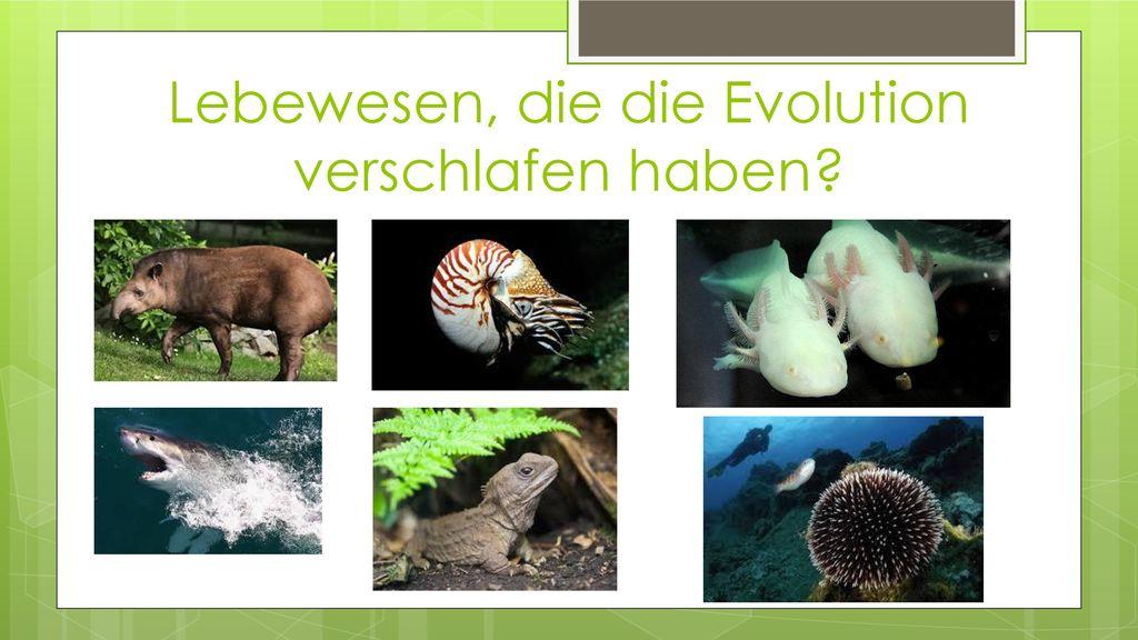 Lebewesen, die die Evolution verschlafen haben