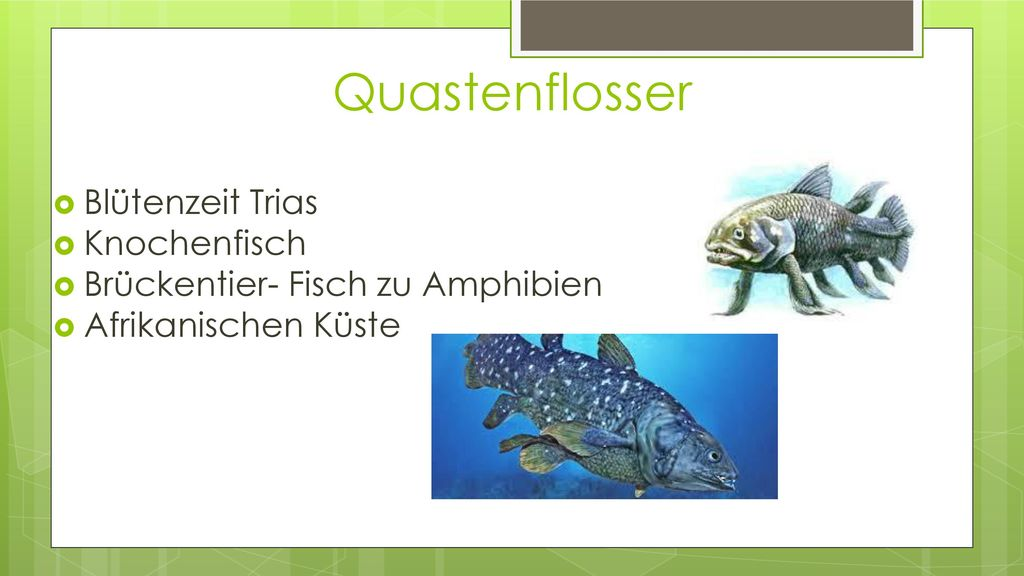 Quastenflosser Blütenzeit Trias Knochenfisch