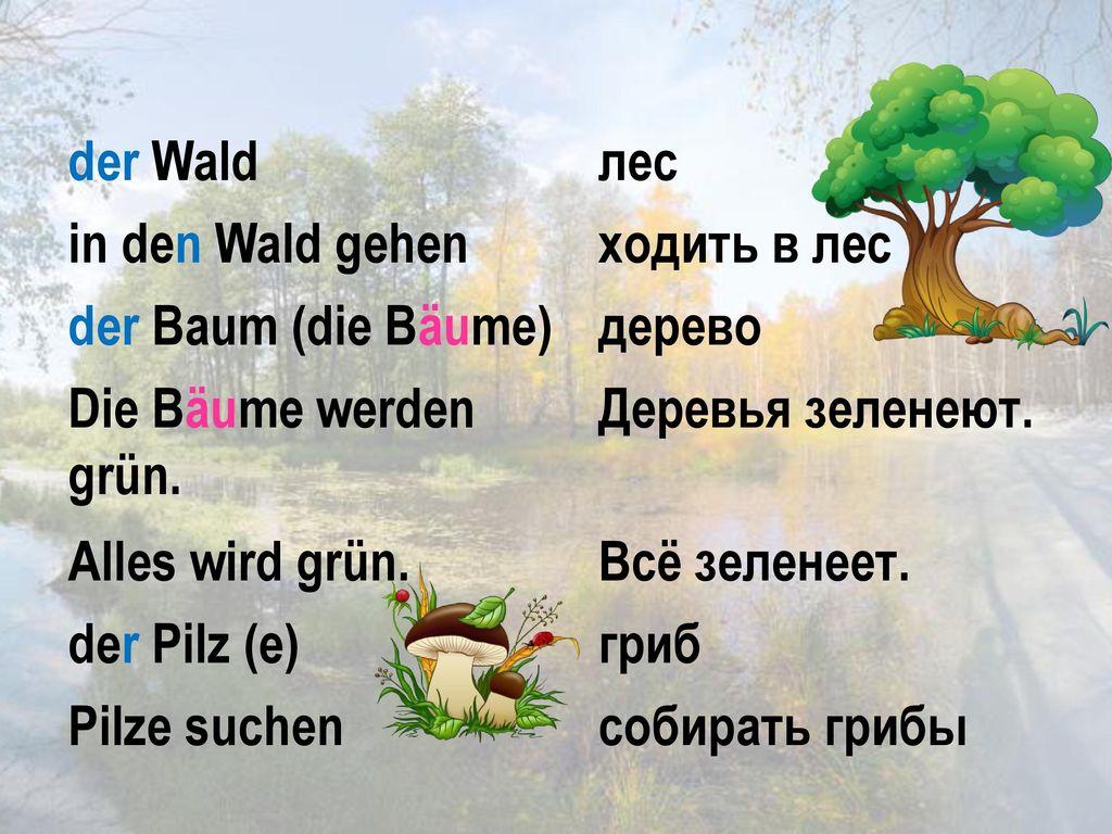 der Wald лес. in den Wald gehen. ходить в лес. der Baum (die Bäume) дерево. Die Bäume werden grün.