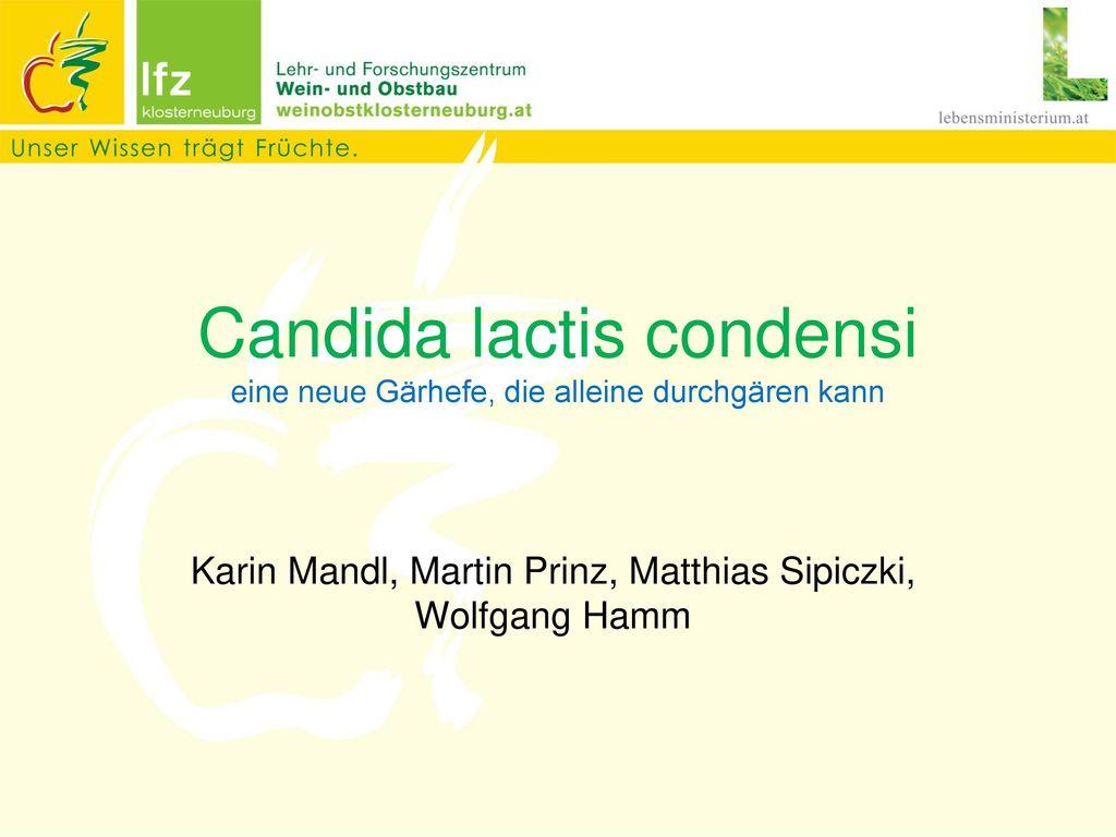 Candida lactis condensi eine neue Gärhefe, die alleine durchgären kann