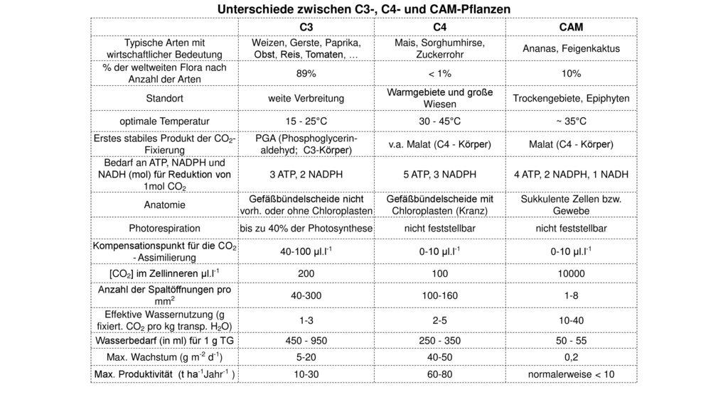 Unterschiede zwischen C3-, C4- und CAM-Pflanzen