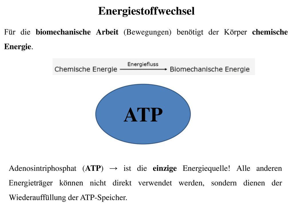 Großartig Chemische Energie Und Atp Arbeitsblatt Antworten Ideen ...