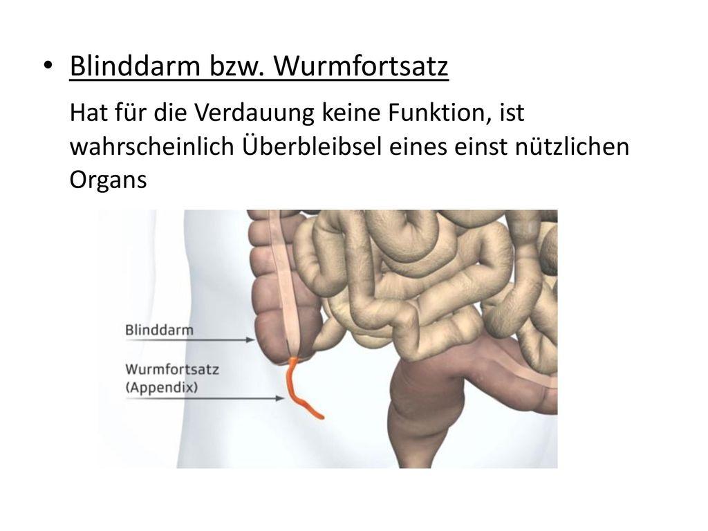 Wunderbar Blinddarm Anatomie Bilder - Anatomie Ideen - finotti.info