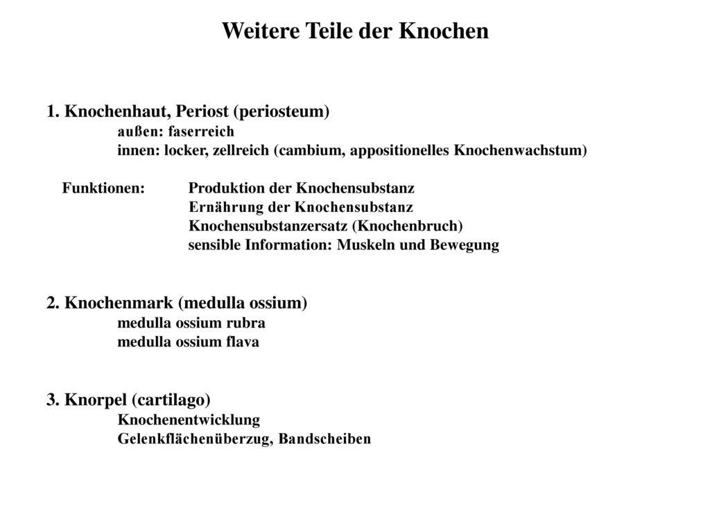Ausgezeichnet Funktion Des Periosts Bilder - Physiologie Von ...