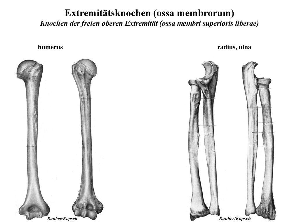 Ziemlich Weiblich Knochenanatomie Ideen - Anatomie Ideen - finotti.info