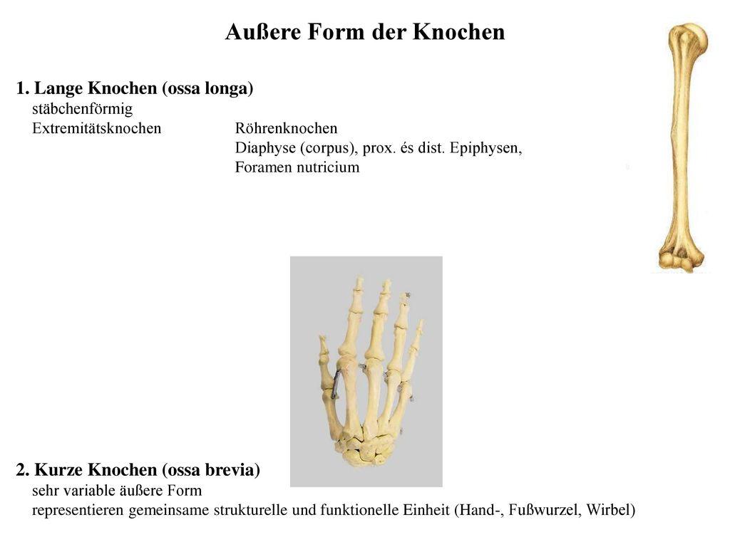 Charmant Mikroskopische Anatomie Des Knochens Bilder - Anatomie ...
