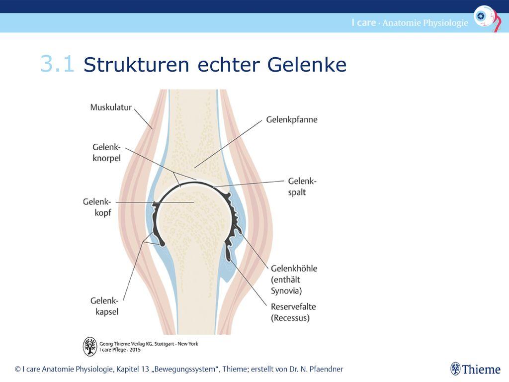 Groß Anatomie Des Gelenkes Galerie - Physiologie Von Menschlichen ...