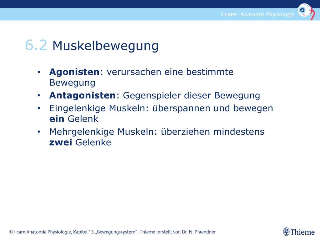 Niedlich Anatomie Und Physiologie Kapitel 6 Die Muskulatur Fotos ...