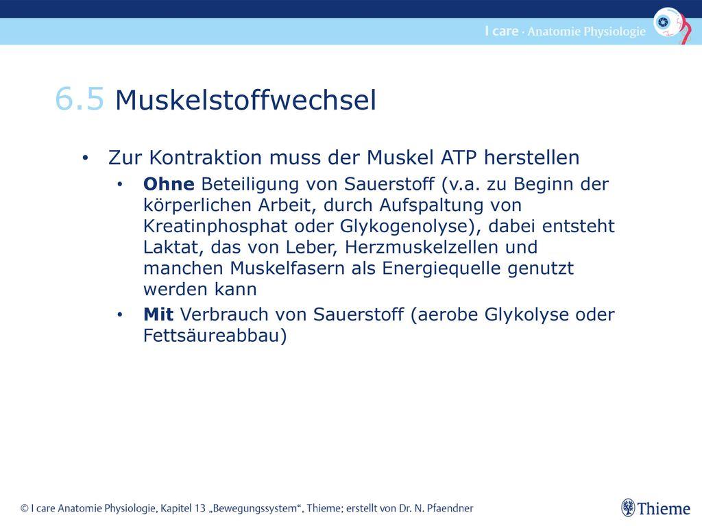 Fein Kapitel 5 Anatomie Und Physiologie Ideen - Menschliche Anatomie ...