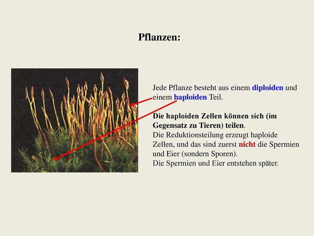 Erfreut Umfang Der Pflanzenanatomie Ideen - Anatomie Ideen - finotti ...