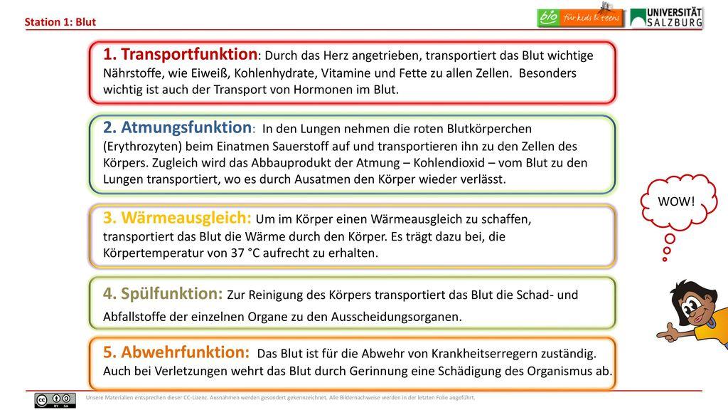 Ausgezeichnet Transport In Zellen Arbeitsblatt Fotos - Mathe ...
