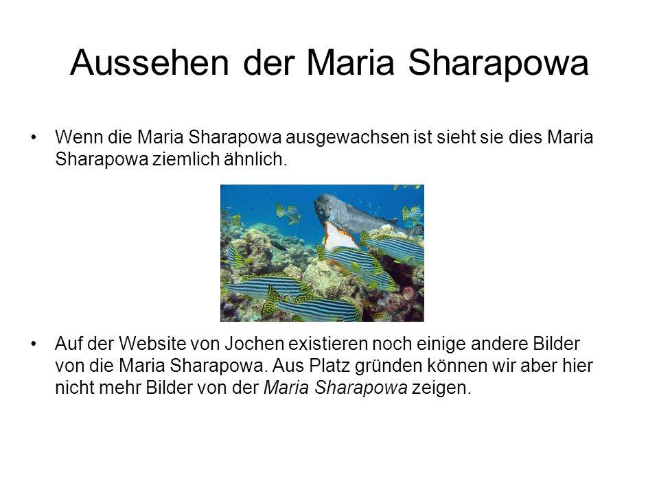 Aussehen der Maria Sharapowa