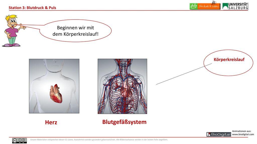 Fein Menschliche Herzanatomie Fotos - Anatomie Ideen - finotti.info