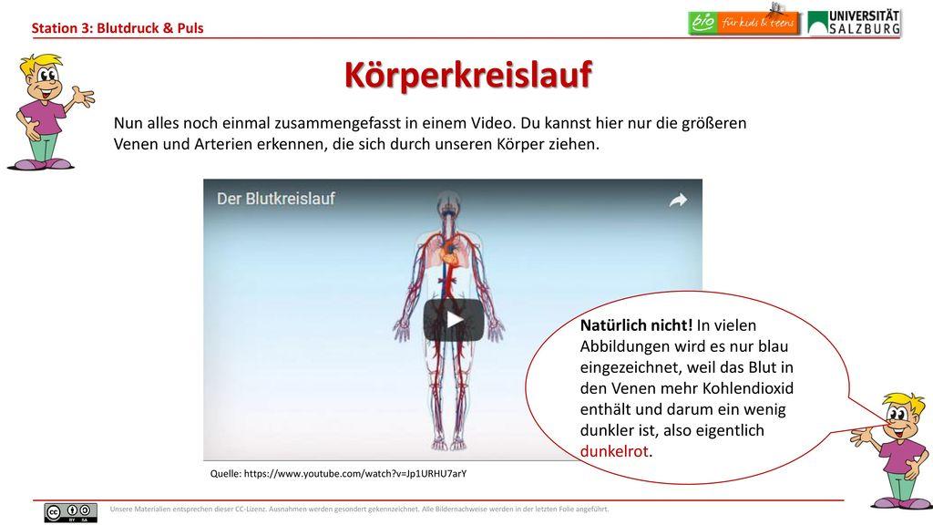 Ziemlich Bild Von Venen Galerie - Anatomie Ideen - finotti.info