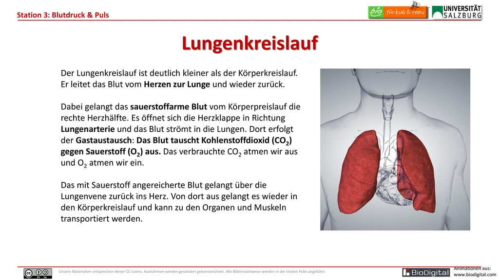 Berühmt Lungenkreislauf Anatomie Galerie - Anatomie Ideen - finotti.info