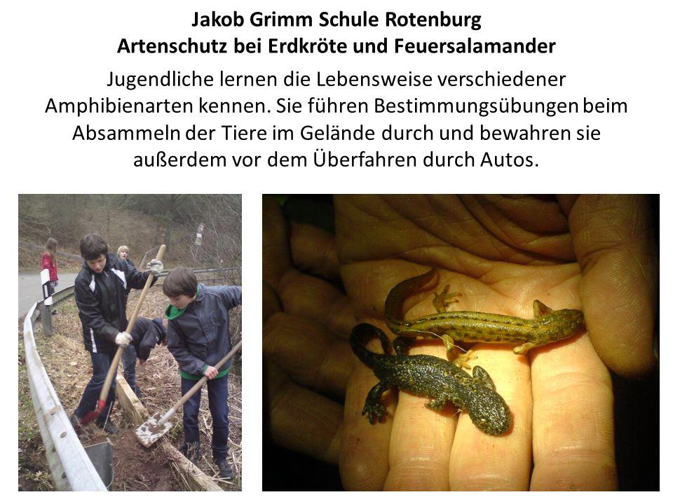 Jakob Grimm Schule Rotenburg Artenschutz bei Erdkröte und Feuersalamander